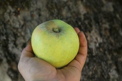 Green Keeper Apple