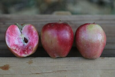 Cox's Red Flesh - Crab Apple