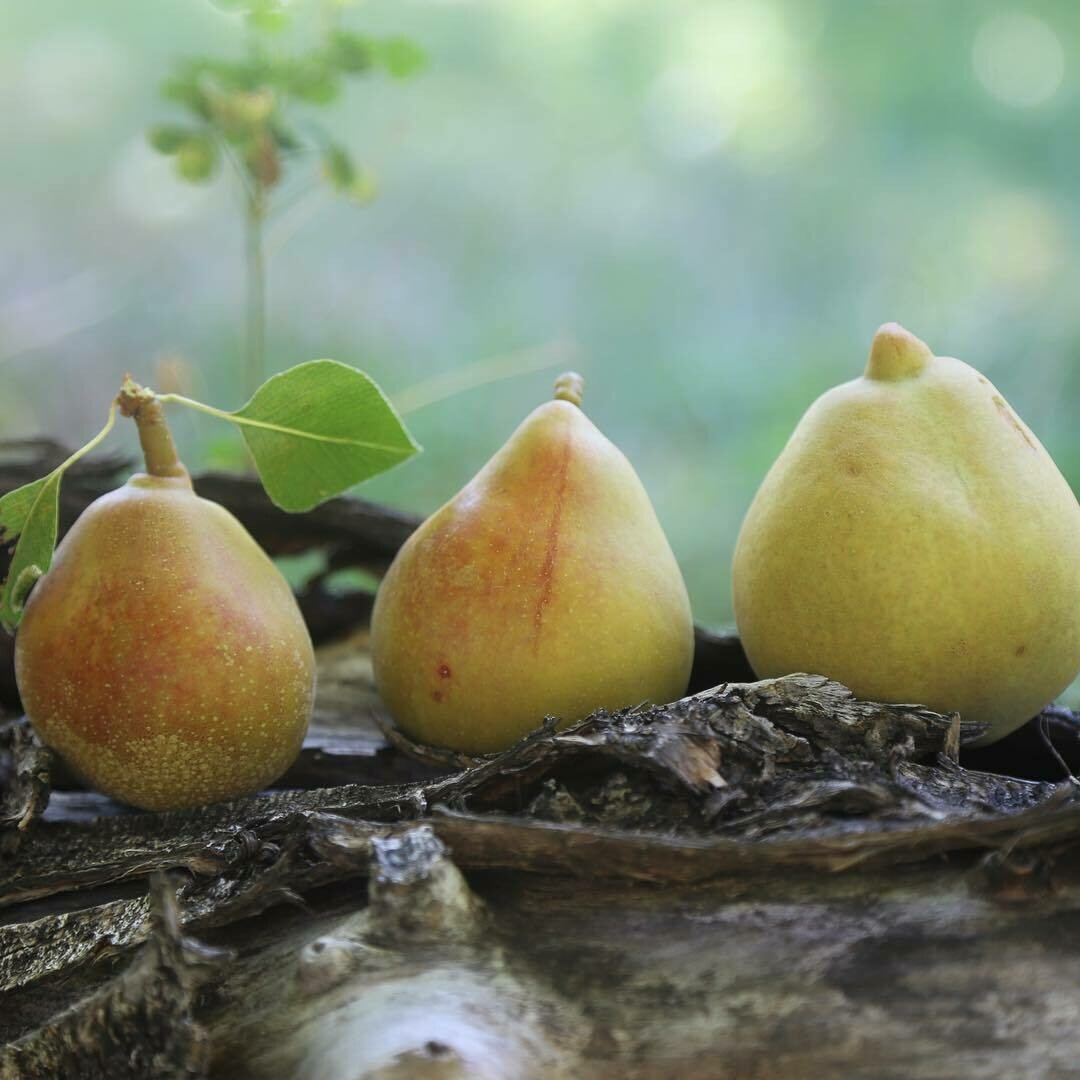 Honeysweet Pear