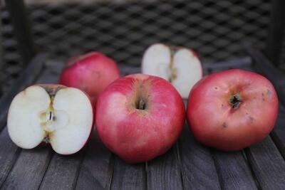 NSJ King Apple