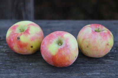 Old School Apple