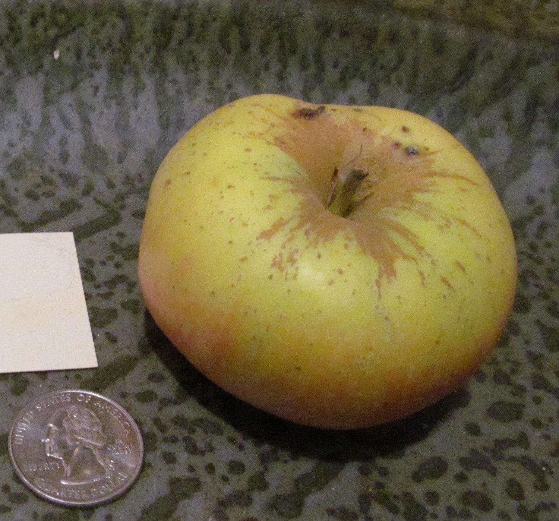 Galloway Pippin Apple