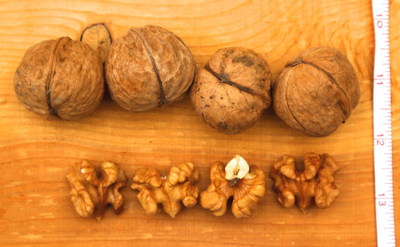 Meylan Walnut
