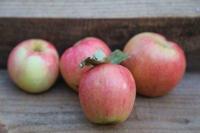 Monarch Apple