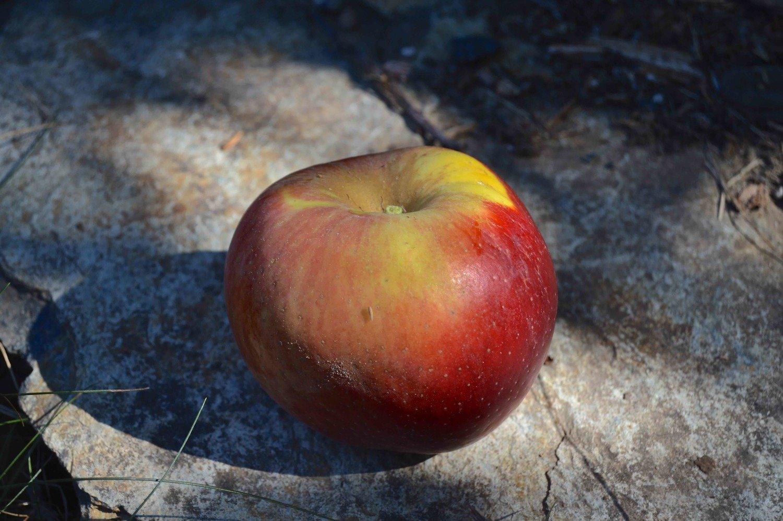 Reinette Franche Apple