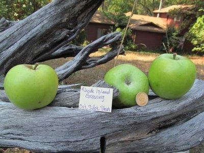Rhode Island Greening Apple