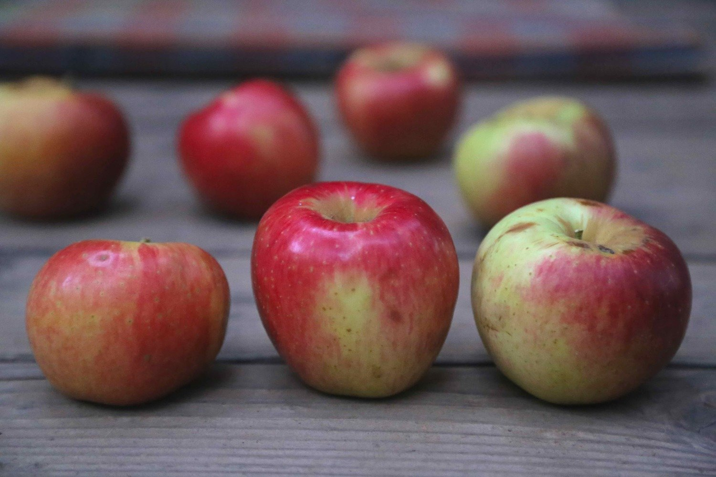 Ribston Pippin Apple