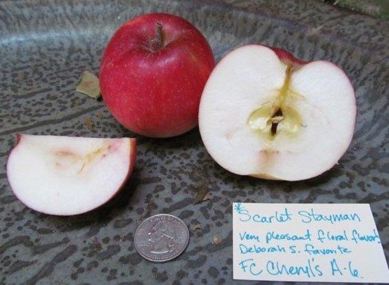 Scarlet Stayman Apple