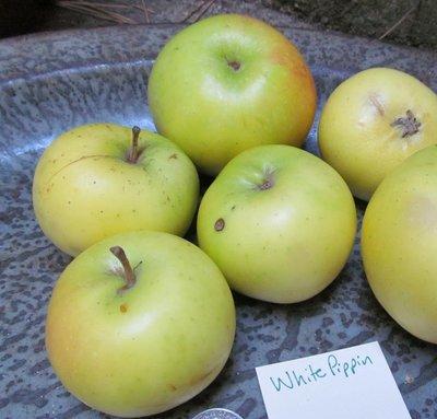 White Pippin Apple