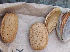 Texas Almond