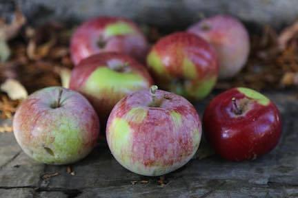 Autumn Strawberry Apple