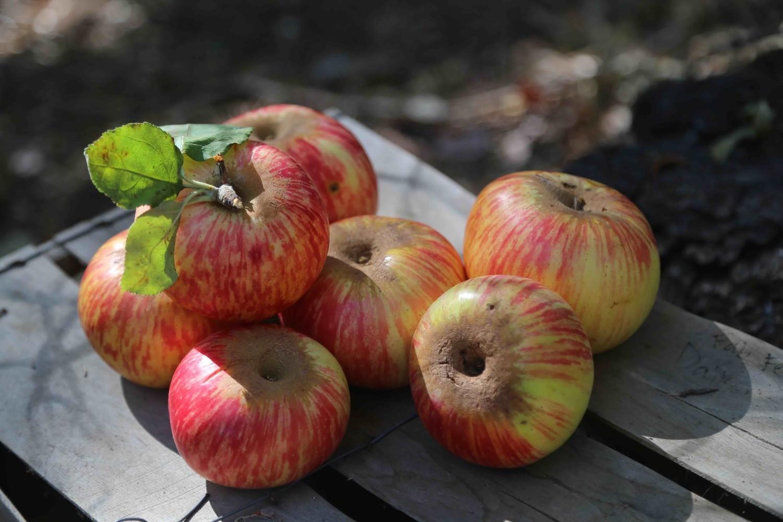 Willow Apple