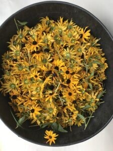 Intro To Natural Dyes Workshop