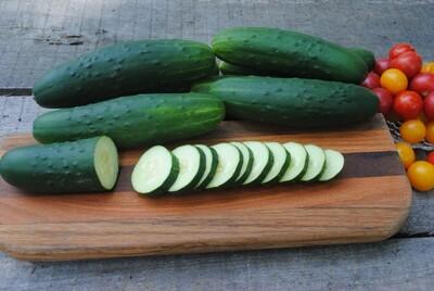 Slicing Cucumber (DMR 401)