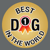 Pet ID Tag - Best Dog In The World