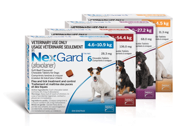 NexGard Chewables - Tick & Flea Control