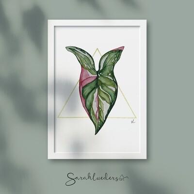 Syngonium Red Spot Tricolor, Aquarellbild