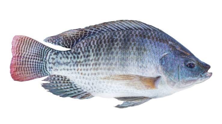 Fish Tilapia / ikan mujair 500g (1pc)