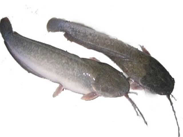 Catfish / LeLe / Magur 800g