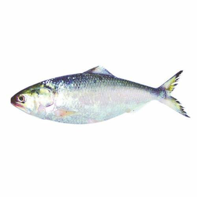 Hilsha Fish whole 1kg