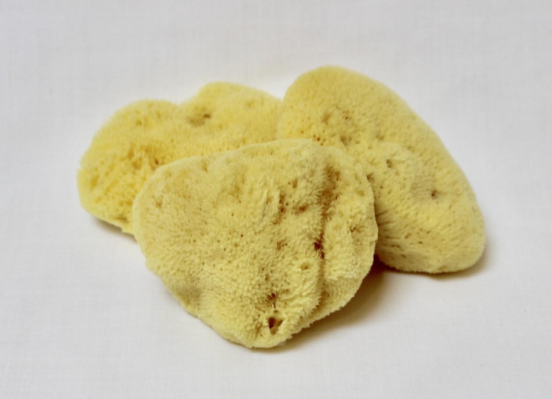 Mediterranean Silk Sponge
