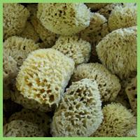 Wool Bathing Sponge (W)