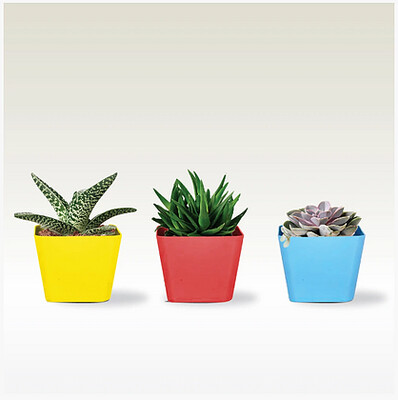 Succulent Planter (Red, Yellow and Blue)- Set of 3