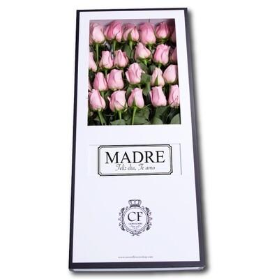 Capri – Luxury Pink Roses