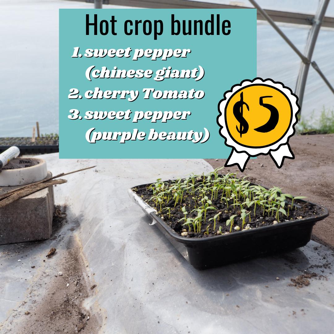 Hot Crop Bundle