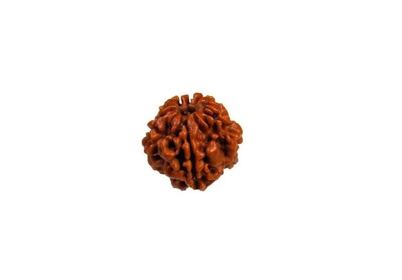 Original 5 Mukhi Nepali Rudraksha Bead with Lab Certificate (17-20 mm)