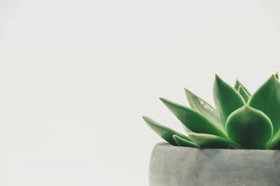 Plant Pot Class