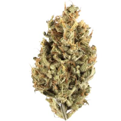[Premium] Amnesia Haze - Sativa
