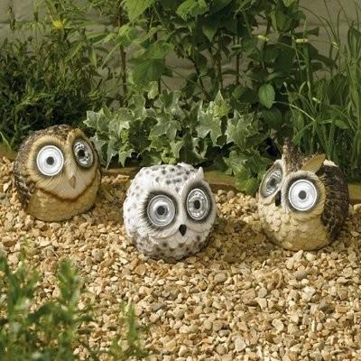 Bright Eye Owls