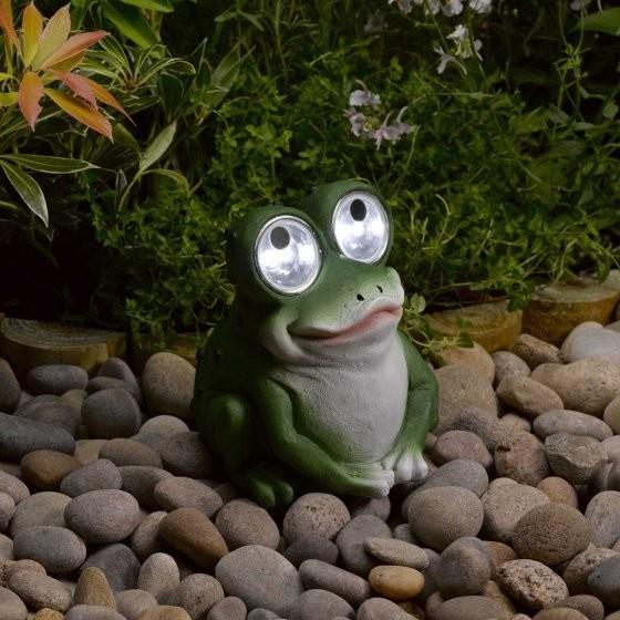 Bright Eye Frog