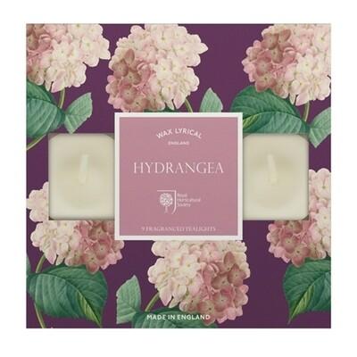 Hydrangea Tealights