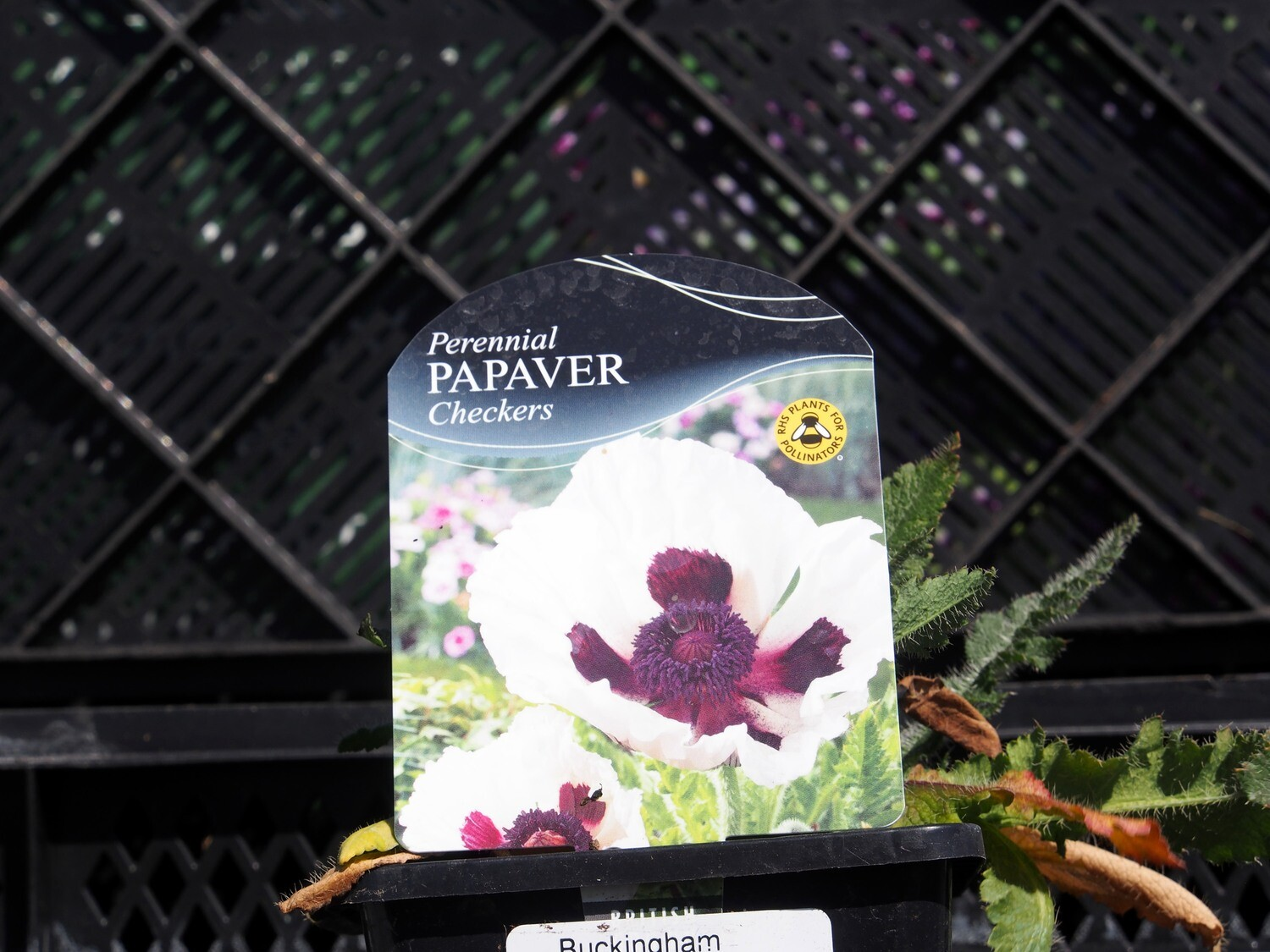 Papaver Checkers