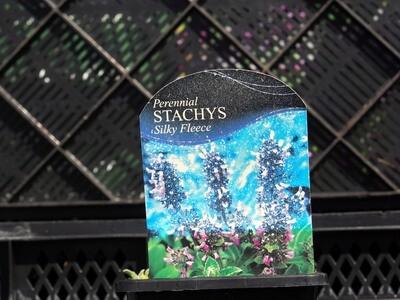 Stachys Silky Fleece