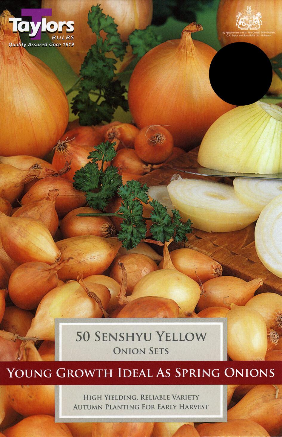 Onion Set Senshyu Yellow x50