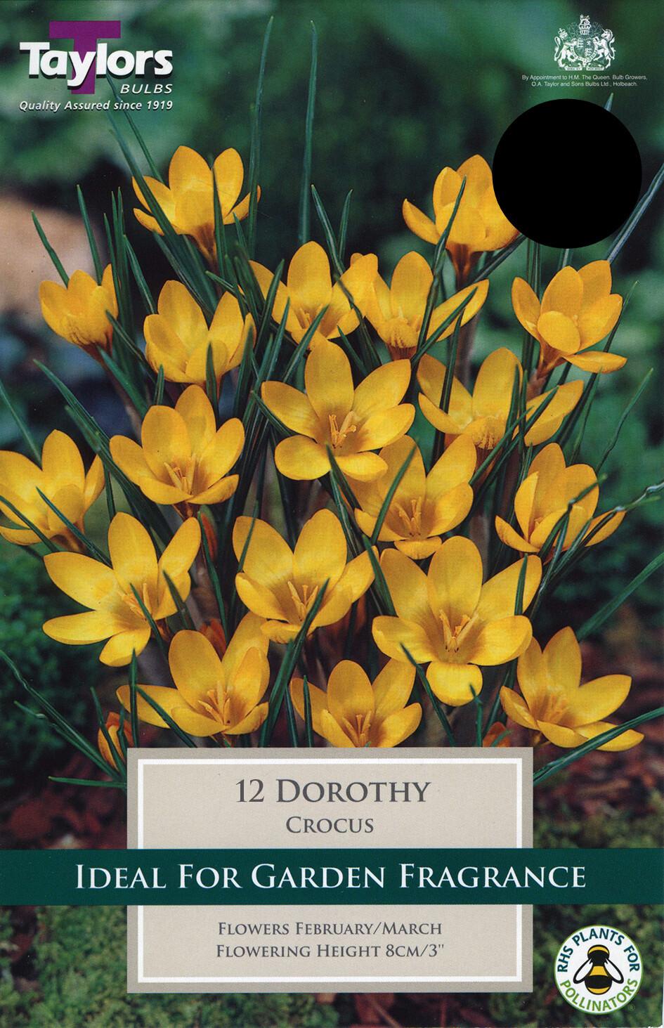 Crocus Dorothy x15