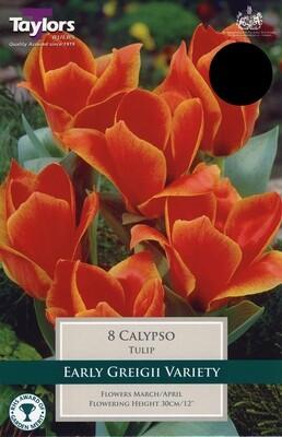 Tulip Calypso x8