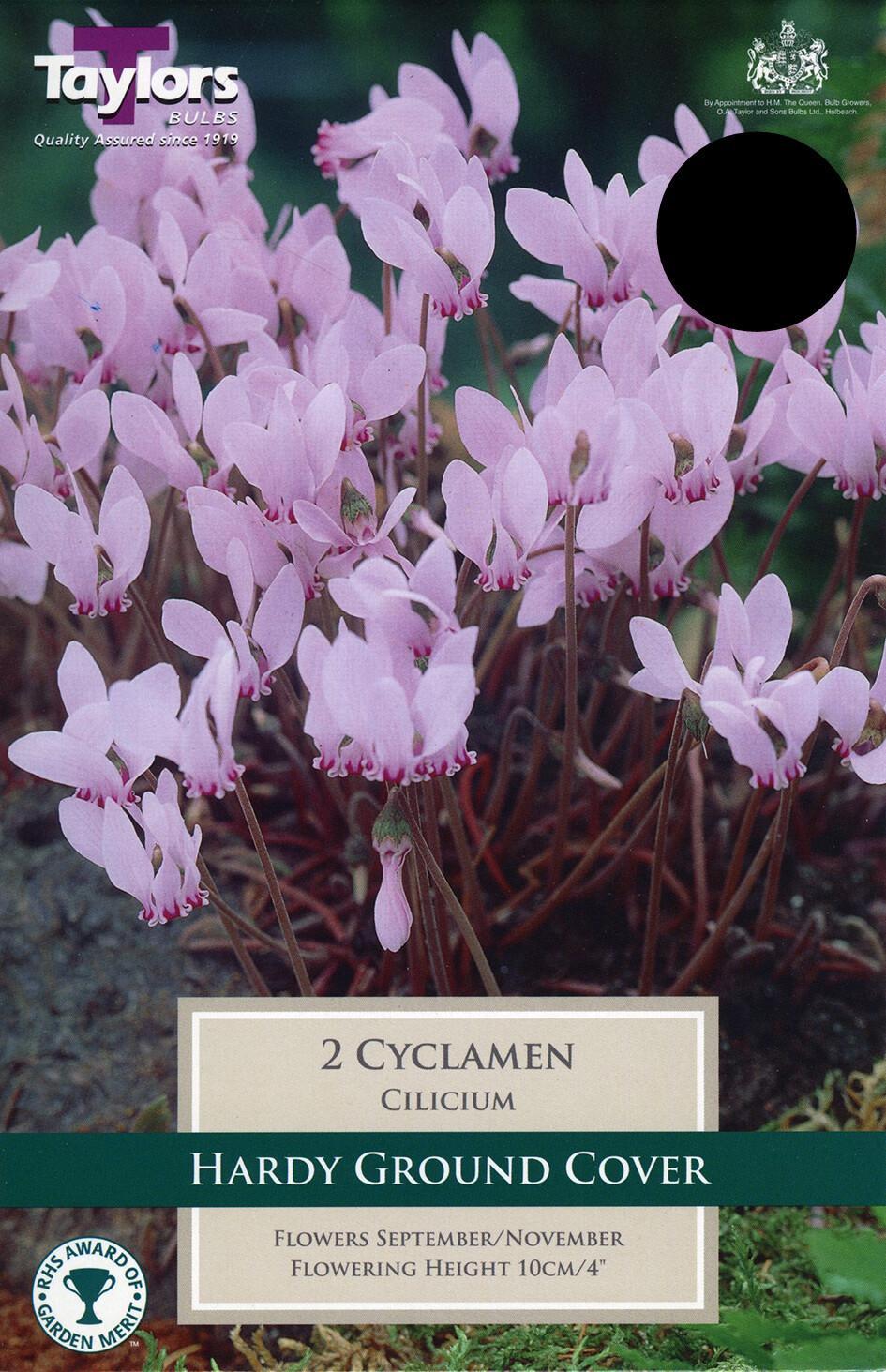 Cyclamen Cilicium x2