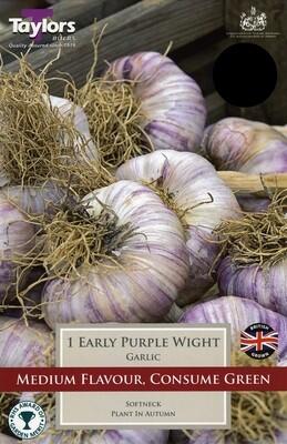 Garlic Early Purple Wight x1
