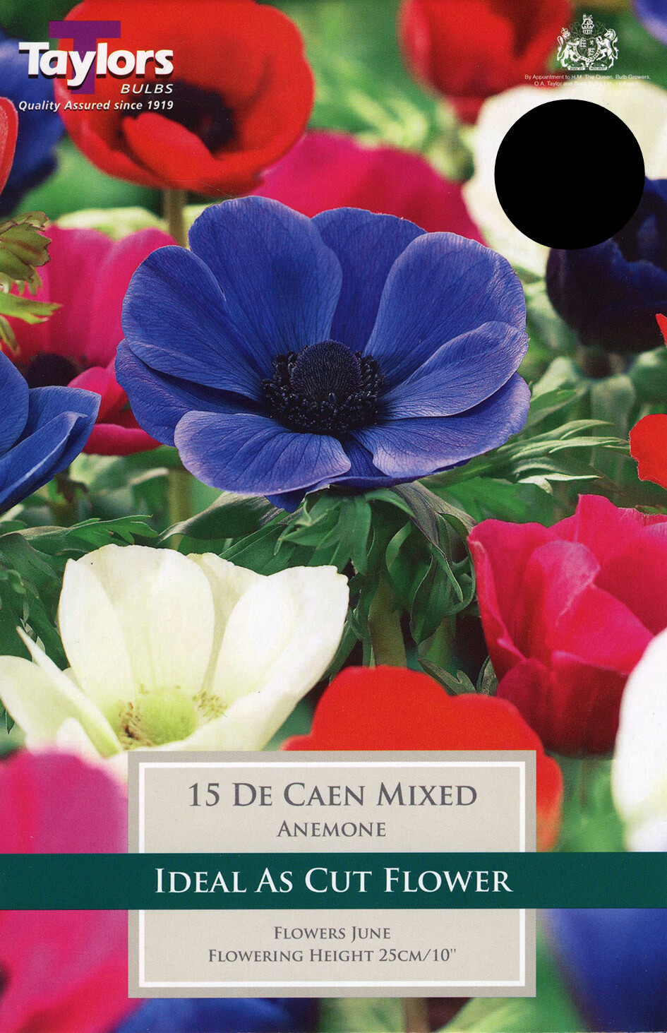 Anemone De Caen Mixed x15