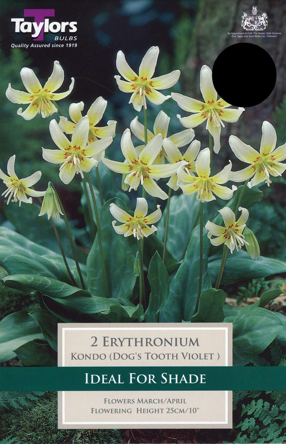 Erythronium Kondo x2