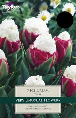 Tulip Ice Cream x7
