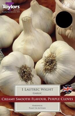 Garlic UK Lautrec Wight x1