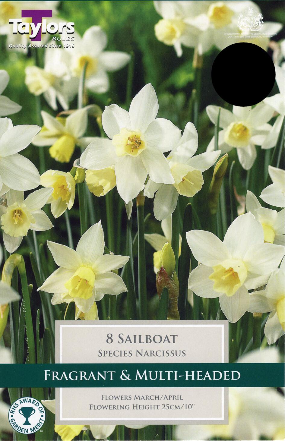 Narcissus Sailboat x8