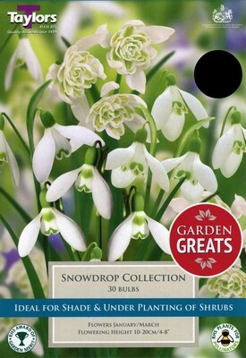 Snowdrop Collection x30