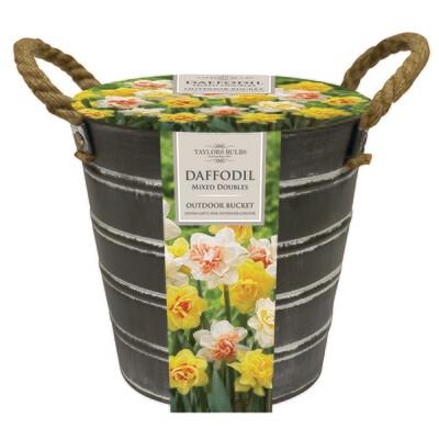 Outdoor Metal Bucket - Mixed Double Daffodils