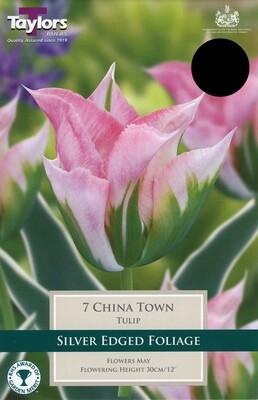 Tulip China Town x7